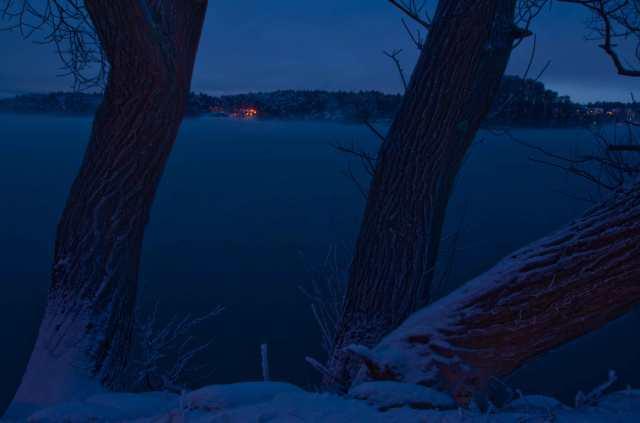 MNI_1288-vinterviken-träd-w