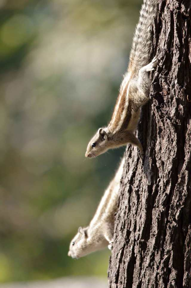 Squirrels-I-web-MNI_1608